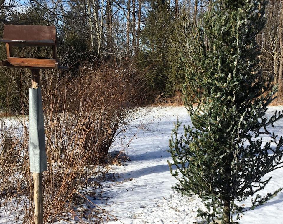 Recycle your Christmas tree for backyard birds