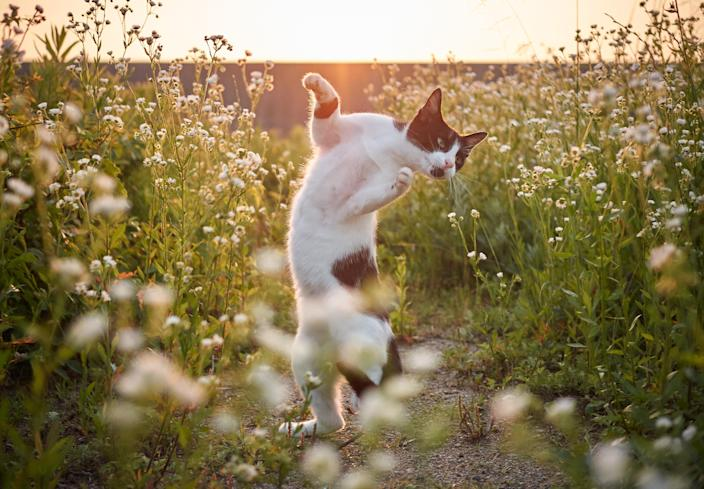 <p><span>The photographs reveal the cats' boundless personality. </span>(Photo: Hisakata Hiroyuki/Caters News) </p>