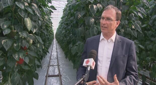 Productions Horticoles Demers CEO Jacques Demers says Quebecers have an even greater taste for local produce because of the COVID-19 pandemic. (Radio-Canada - image credit)