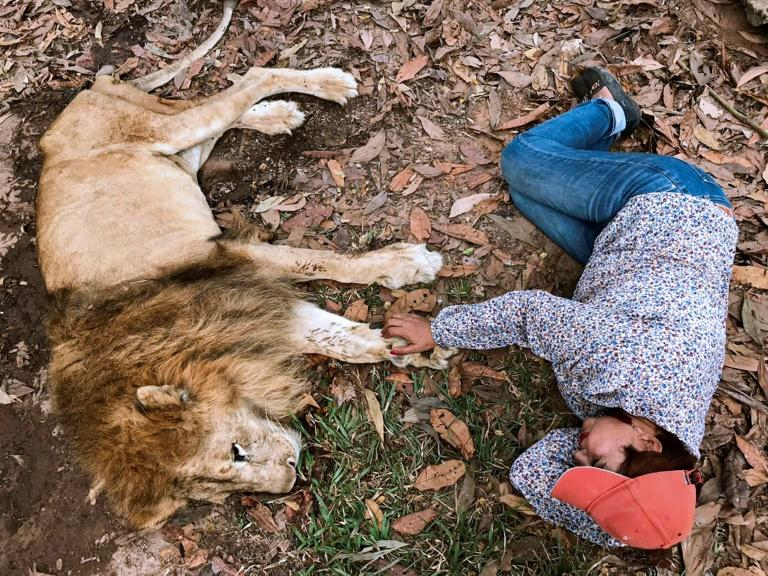 Keeper Ana Julia Torres rests next to Jupiter, a diminished 20-year-old lion, at Los Caimanes zoo in Monteria, Colombia