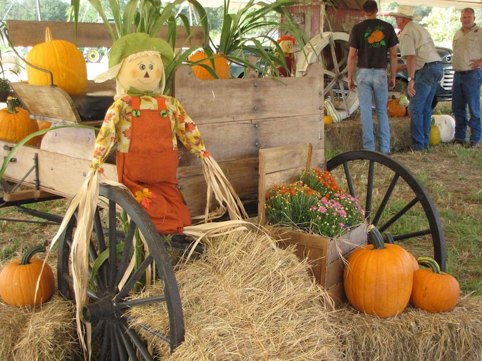"""<p><strong>Dunnellon, Florida</strong></p><p>Pumpkins and Florida don't get along too well, but farmers Steven Dixon and Scott Thomas didn't let that get in their way at <a href=""""https://dunnellonpumpkinpatch.com/"""" rel=""""nofollow noopener"""" target=""""_blank"""" data-ylk=""""slk:The Pickin' Patch"""" class=""""link rapid-noclick-resp""""><strong>The Pickin' Patch</strong></a>. Though they are watermelon farmers most of the time, they enjoy spending their fall hosting a popular pumpkin patch. Admission is only $5 per person and children 3 and under are free. </p><p>Be sure to check out their website for updates about reopening for the 2021 season.</p>"""