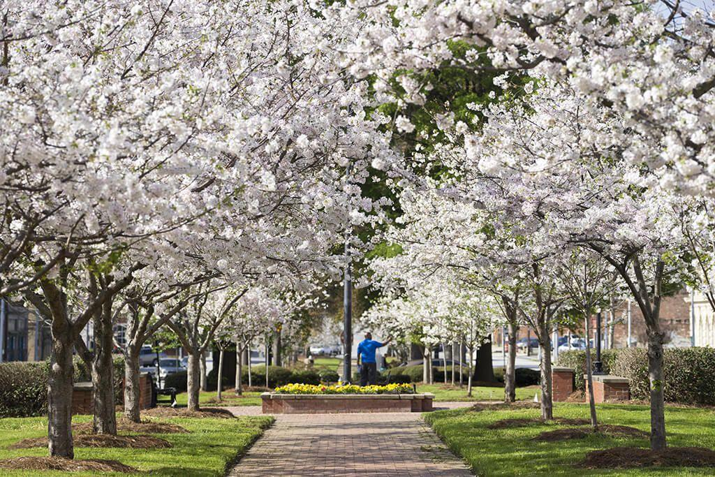 "<p><em>March 22 to 31</em></p><p>To celebrate the city's whopping 350,000 Yoshino cherry trees, <a href=""https://cherryblossom.com/"" target=""_blank"">Macon Georgia's International Cherry Blossom Festival</a> goes all out with over 50 events like a pink <a href=""https://www.womansday.com/food-recipes/g2867/easter-brunch-recipes/"" target=""_blank"">pancake breakfast</a>, Tunes & Balloons night (music and $10 hot air balloon rides!), and a cherry blossom parade to name a few. Central City Park even transforms into a fairground with around 25 rides and nightly concerts. </p>"