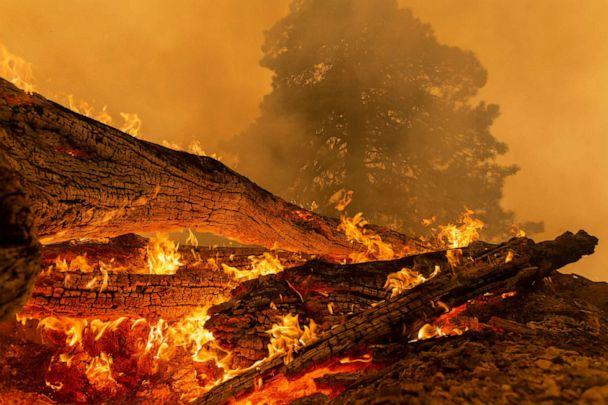 PHOTO: MONROVIA, CA - SEPTEMBER 10: The Bobcat Fire burns downed trees in the Angeles National Forest on September 10, 2020 north of Monrovia, California. (David Mcnew/Getty Images)