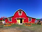 """<p>There's a reason this adorable venue is called <a href=""""https://www.annabellesfunfarm.com/"""" rel=""""nofollow noopener"""" target=""""_blank"""" data-ylk=""""slk:Annabelle's Fun Farm"""" class=""""link rapid-noclick-resp"""">Annabelle's Fun Farm</a>. With bounce houses, corn mazes, candy cannons, hay rides, play yards, friendly farm animals, and, of course, a pumpkin patch filled with autumnal goodies, your family will be entertained for hours at this <a href=""""https://go.redirectingat.com?id=74968X1596630&url=https%3A%2F%2Fwww.tripadvisor.com%2FTourism-g51736-Welch_Oklahoma-Vacations.html&sref=https%3A%2F%2Fwww.countryliving.com%2Flife%2Ftravel%2Fg21273436%2Fpumpkin-farms-near-me%2F"""" rel=""""nofollow noopener"""" target=""""_blank"""" data-ylk=""""slk:Welch, Oklahoma"""" class=""""link rapid-noclick-resp"""">Welch, Oklahoma</a>, farm.</p><p><a class=""""link rapid-noclick-resp"""" href=""""https://go.redirectingat.com?id=74968X1596630&url=https%3A%2F%2Fwww.tripadvisor.com%2FAttractions-g51736-Activities-Welch_Oklahoma.html&sref=https%3A%2F%2Fwww.countryliving.com%2Flife%2Ftravel%2Fg21273436%2Fpumpkin-farms-near-me%2F"""" rel=""""nofollow noopener"""" target=""""_blank"""" data-ylk=""""slk:PLAN YOUR TRIP"""">PLAN YOUR TRIP</a><br></p>"""
