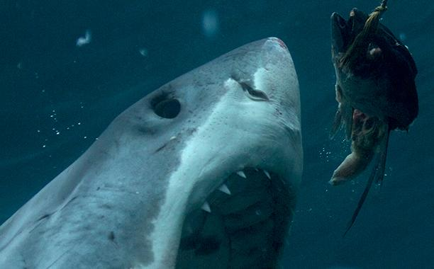 Shark Week calendar: Your ultimate guide to all 17 programs