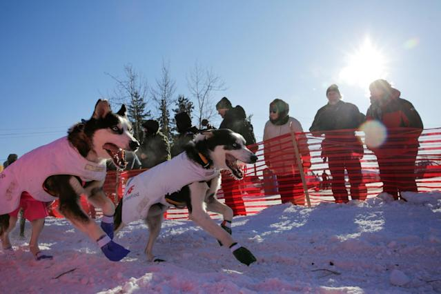 <p>Lars Monsen of Norway competes in the official restart of the Iditarod, a nearly 1,000 mile (1,610 km) sled dog race across the Alaskan wilderness, in Fairbanks, Alaska, U.S. March 6, 2017. REUTERS/Nathaniel Wilder </p>