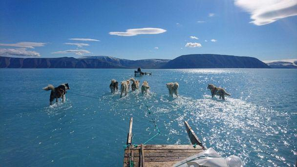 PHOTO: Sled dogs wade through standing water on the sea ice during an expedition in North Western Greenland, June 13, 2019. (Steffen Olsen/AFP/Getty Images)