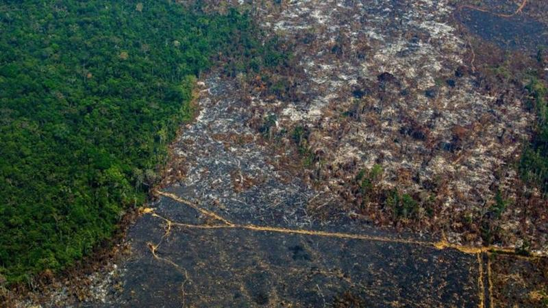 French supermarket giant Casino 'put on notice' over illegal logging in Amazon