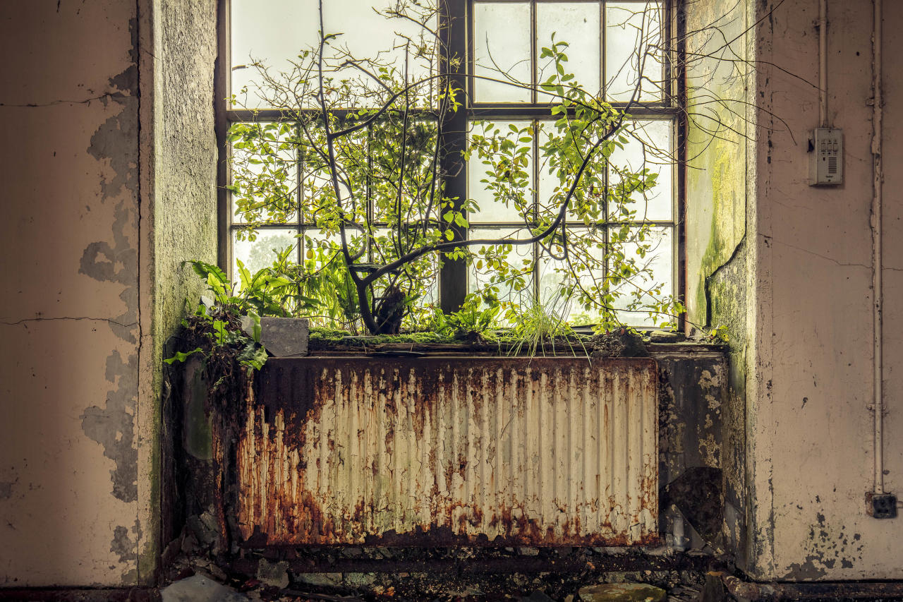 <p>A tree grows from a radiator in a former hospital in Ireland. (Photo: James Kerwin/Caters News) </p>