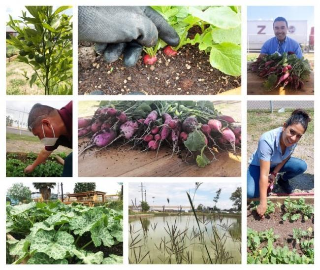 CNH Industrial employees enjoy the new garden project