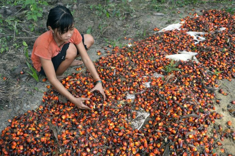 European officials insist any final deal with Indonesia on trade would not come at the expense of acceptable environmental or labour standards