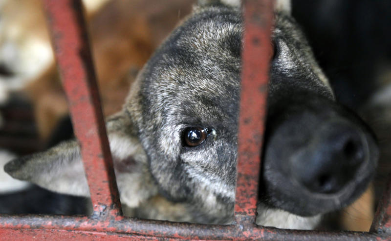 Vietnam's Capital Hanoi Urges Residents to Stop Eating Dog and Cat Meat