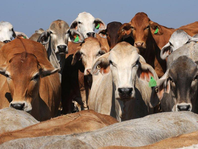 ANZ asked to help Indon cattle industry