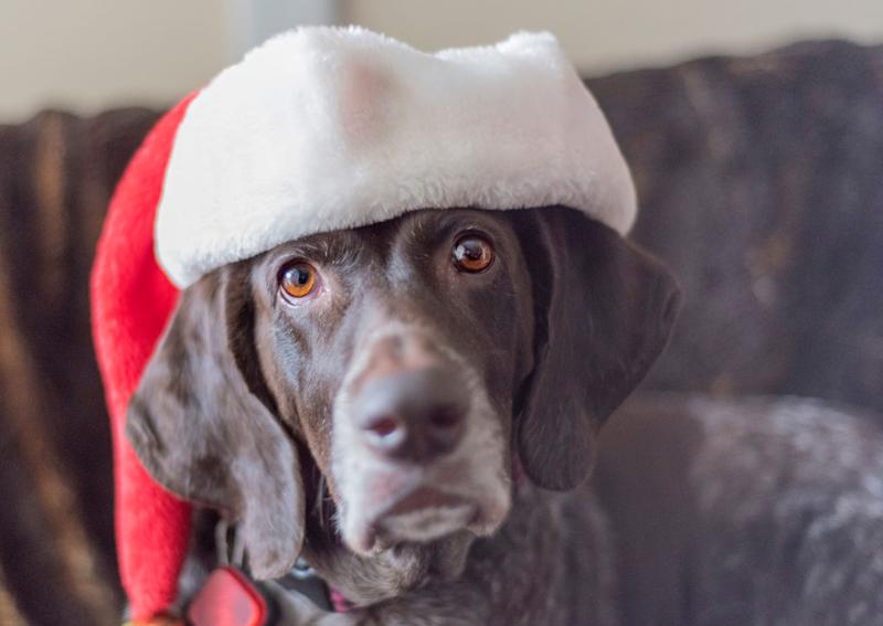 Southeast Queensland animal rescue Happy Tails is warning shoppers not to buy cheap dog treats ahead of the holidays because they could make their pets sick.