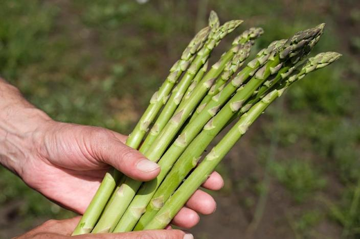 The reason why some people think that eating asparagus makes their urine smell odd may be genetic according to a new scientific study (AFP Photo/ARMEND NIMANI)
