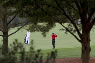 Tiger Woods hits his second shot on the second fairway during the final round of the Masters golf tournament Sunday, Nov. 15, 2020, in Augusta, Ga. (Curtis Compton/Atlanta Journal-Constitution via AP)
