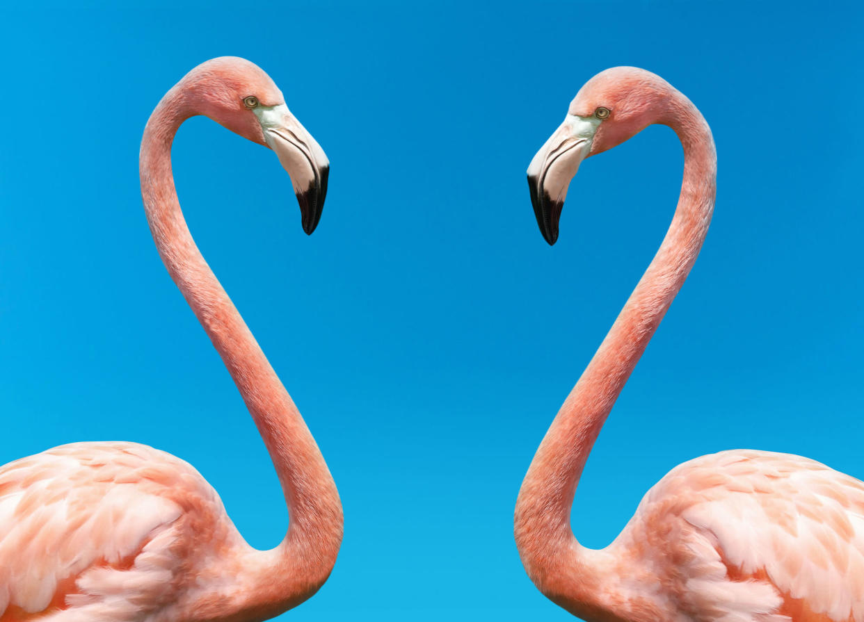 WARNING: Embargoed for publication until 00:00:01 on 21/09/2021 - Programme Name: The Mating Game - TX: n/a - Episode: Generic (No. n/a) - Picture Shows: Flamingos  - (C)  Getty Images - Photographer:  Getty Images