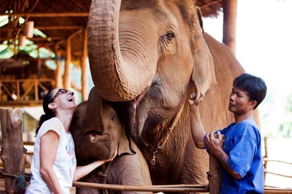 Elephant poo coffee, anyone? Thai hotel firm's latest treat for guests