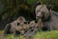 "<p>Grizzly bears in Great Bear Rainforest, Canada // October 5, 2014</p><p><strong>RELATED: </strong><a href=""https://www.redbookmag.com/life/mom-kids/g4382/animals-act-like-parents/"" rel=""nofollow noopener"" target=""_blank"" data-ylk=""slk:9 Animals That Are Basically You As a Parent"" class=""link rapid-noclick-resp""><strong>9 Animals That Are Basically You As a Parent</strong></a></p>"