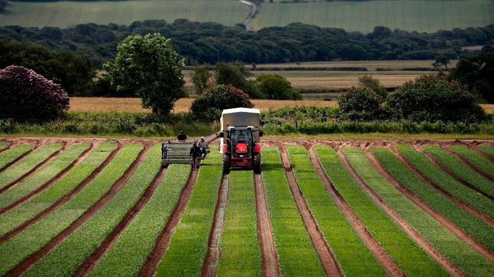A second report will examine the food system in more depth