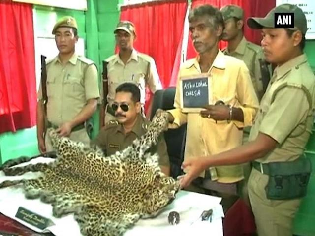 A smuggler was arrested with a 10-feet-long leopard skin in Jalpaiguri district. Acting on information received, forest officers of Belacoba range intercepted a group of three people who were trying to smuggle the skin to Nepal. They managed to arrest one person and also seized the skin. He added they have in the past recovered Royal Bengal tiger and cheetah skins and claimed these were likely part of an international racket. Poaching in India has reduced the population of several species including tigers, elephants and rhinos.