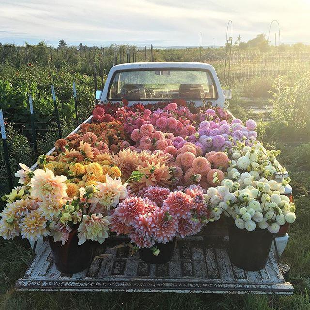 """<p>As the founder of <a href=""""http://www.countryliving.com/gardening/g2533/floret-flower-farm/"""" rel=""""nofollow noopener"""" target=""""_blank"""" data-ylk=""""slk:Floret Flower Farm"""" class=""""link rapid-noclick-resp"""">Floret Flower Farm</a>, Erin has captured a wide audience through her social media presence and hands-on workshops at her 3-acre farm in Washington.<span> If her Instagram is any indication, her show would combine gardening tips with ways to decorate with the florals you grow yourself.</span></p><p><span><br></span></p><p><span><strong>See more at <a href=""""http://www.floretflowers.com/blog/"""" rel=""""nofollow noopener"""" target=""""_blank"""" data-ylk=""""slk:Floret Flower"""" class=""""link rapid-noclick-resp"""">Floret Flower</a>.</strong><br></span></p>"""
