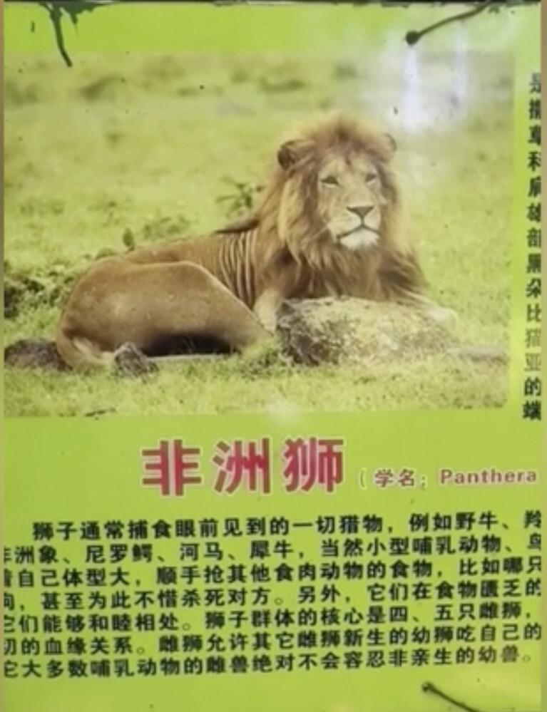 The cage sign advertising an African lion in the cage. Photo: Handout