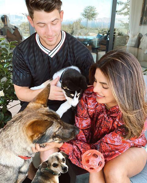 """<p>The Quantico actress shared that she had adopted an adorable new puppy with husband Nick Jonas. Already proud dog parents to Diana the chihuahua and Gino the german shepherd, their new addition is Panda, a Husky Australian Shepard mix. </p><p>Posing for a new family photo, the Chopra Jonas' Photoshopped in Diana so not to exclude her. Fair enough.<br></p><p><a href=""""https://www.instagram.com/p/CDoszLHD9_H/"""">See the original post on Instagram</a></p>"""