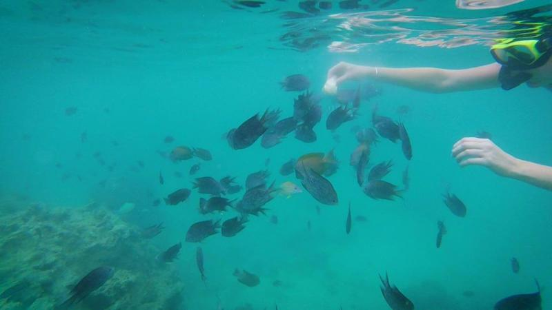 Get up close to all the tropical fish in the waters off Iririki Island. Photo: Supplied