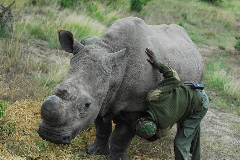 Celebrities Head to Africa to Help Save the World's Last Male Northern White Rhino
