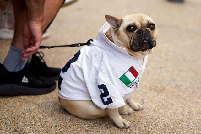 A dog in an Italy shirt outside of Wembley stadium