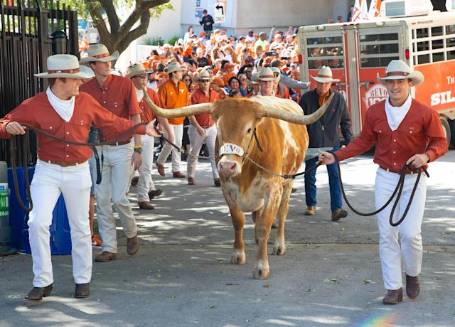 Texas Longhorn mascot Bevo enters before the Orange-White Texas Spring game at Darrell K Royal-Texas Memorial Stadium on April 13. (Credit: USAT)