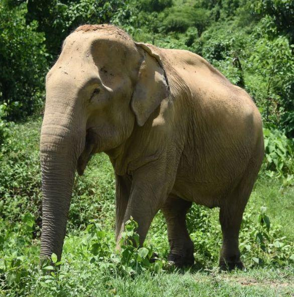 You can donate to stop elephant rides. Photo: World Animal Protection