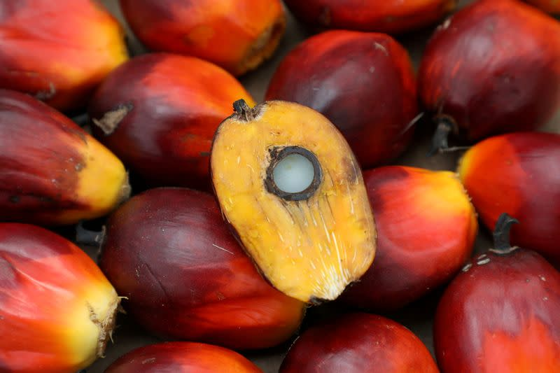 FILE PHOTO: A palm oil seed is seen at a plantation in Pulau Carey, Malaysia