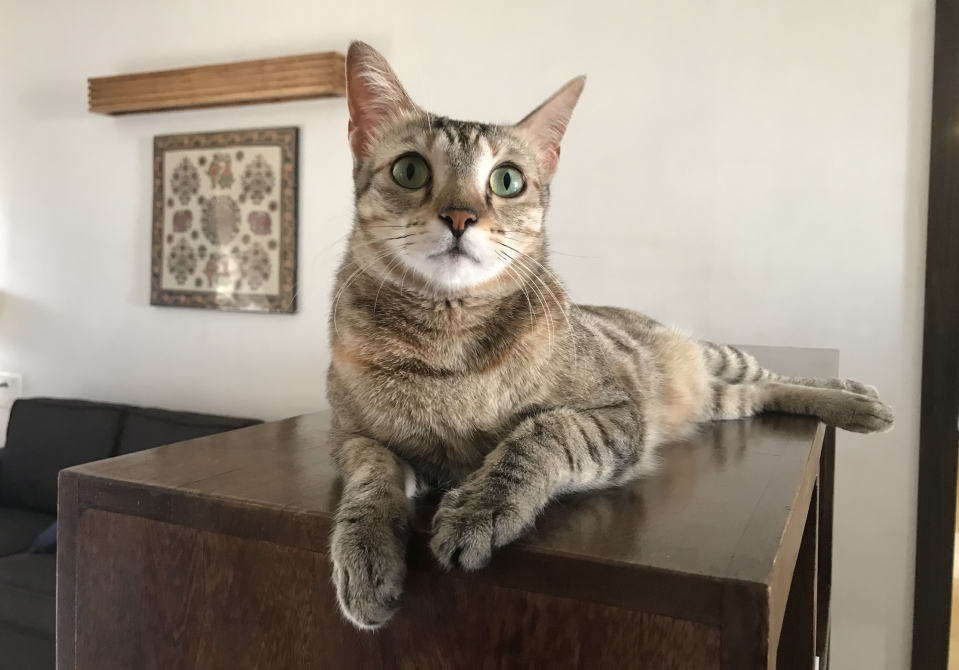 Our home style has always been minimalist and functional. But the fact remains that over and above all that, our home is designed to cater to the needs of our beloved four rescue cats. #AdoptDontShop