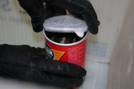 A king cobra snake seen in a container of chips in this udated handout photo obtained July 25, 2017.  United States Attorney's Office Central District of California/Handout via REUTERS