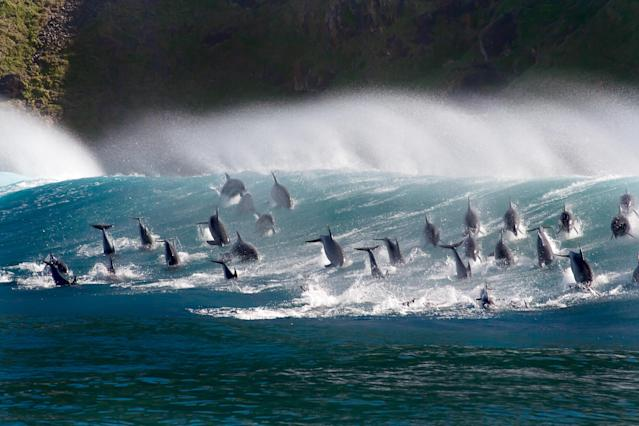 Surfing dolphins. (Photo: BBC AMERICA/BBC NHU 2017)
