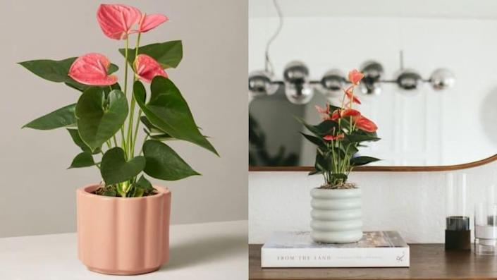 Best Valentine's Day gifts: A plant from The Sill