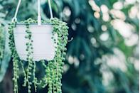 <p>We're sold on this hanging succulent for its striking bead-like looks alone. It's also drought-resistant.<br></p><p><strong>Zones: 8a to 10b</strong></p>
