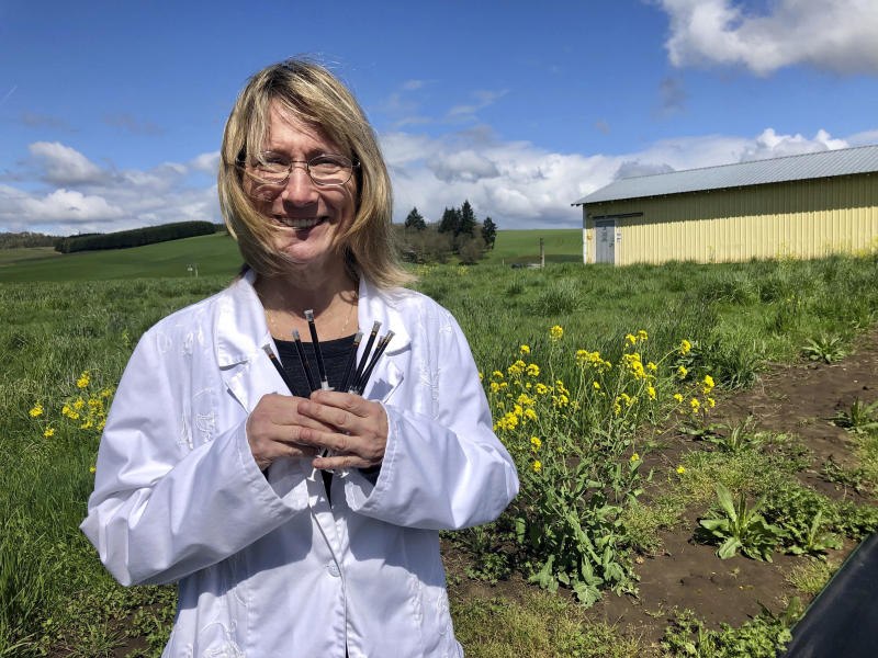 In this April 12, 2019, photo, Cyndi Michael, a former medical marijuana grower, holds the last syringes of cannabis tincture she will process for sale in Rickreall, Ore., after deciding to no longer grow medical marijuana. The number of medical marijuana growers participating in Oregon's 20-year-old medical cannabis program has plummeted after the state legalized cannabis for all adults. Michael, who once grew for eight patients, could no longer make ends meet and also lost her business selling supplies to other medical marijuana growers. (AP Photo/Gillian Flaccus)