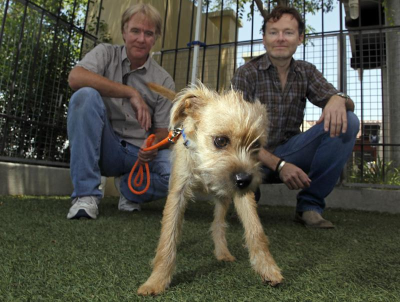 """In this Thursday, June 14, 2012 photo, Brandon Camp, right, writer, producer and director of the upcoming feature film remake of """"Benji,"""" and animal trainer  Mark Forbes, check out a 3-month-old fox terrier mix named Fairfield at the Best Friends Animal Society shelter in the Mission Hills area of Los Angeles. Camp, whose father created """"Benji"""" nearly 40 years ago, and veteran movie trainer Forbes have set out to find a new Benji in a nationwide search that includes online tools and sites that weren't around when the first four Benjis were discovered. (AP Photo/Reed Saxon)"""