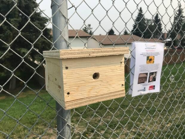 These bee boxes have been installed along 16th Avenue N.E. as part of a pilot project to boost biodiversity. (Scott Dippel/CBC - image credit)