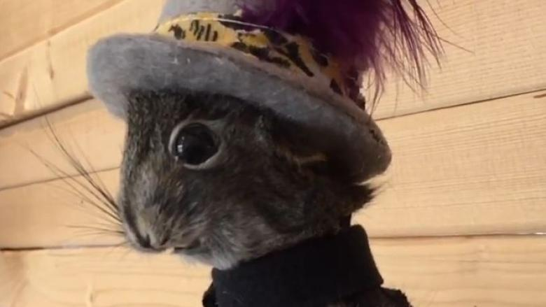 Gord Downie, as squirrel: Yukon woman makes art from animals
