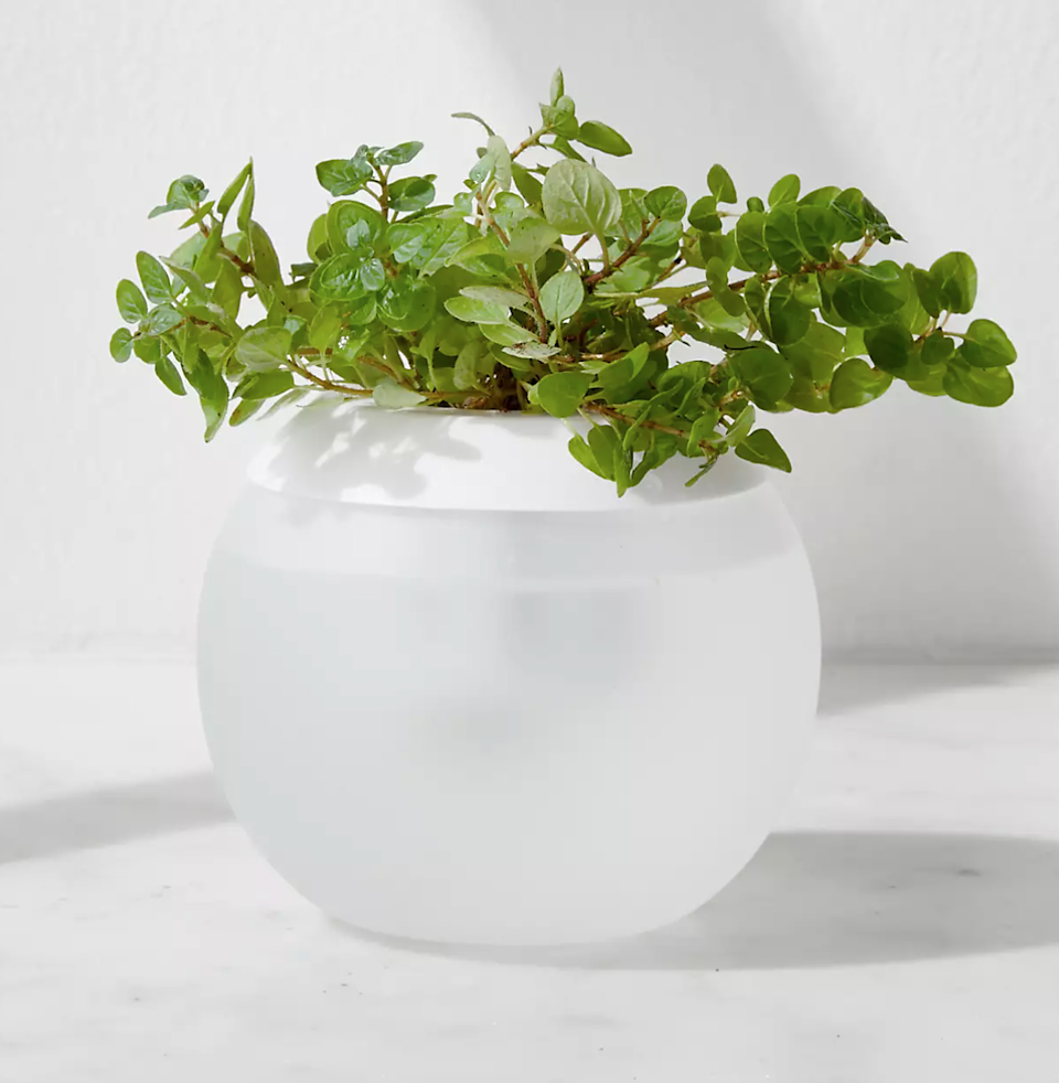 """<h2>Crate and Barrel Hydropod</h2><br><strong>Best For: Growing Herbs From Scratch</strong><br>The Hydropod completely cuts out soil from the planting process — no more dirt under fingernails or messy clean-up, just sustainable coconut husks and water.<br><br><em>Shop</em> <strong><em><a href=""""https://www.crateandbarrel.com/"""" rel=""""nofollow noopener"""" target=""""_blank"""" data-ylk=""""slk:Crate & Barrel"""" class=""""link rapid-noclick-resp"""">Crate & Barrel</a></em></strong><br><br><strong>Crate and Barrel</strong> Hydropod, $, available at <a href=""""https://go.skimresources.com/?id=30283X879131&url=https%3A%2F%2Fwww.crateandbarrel.com%2Fhydropod%2Fs381345"""" rel=""""nofollow noopener"""" target=""""_blank"""" data-ylk=""""slk:Crate and Barrel"""" class=""""link rapid-noclick-resp"""">Crate and Barrel</a>"""
