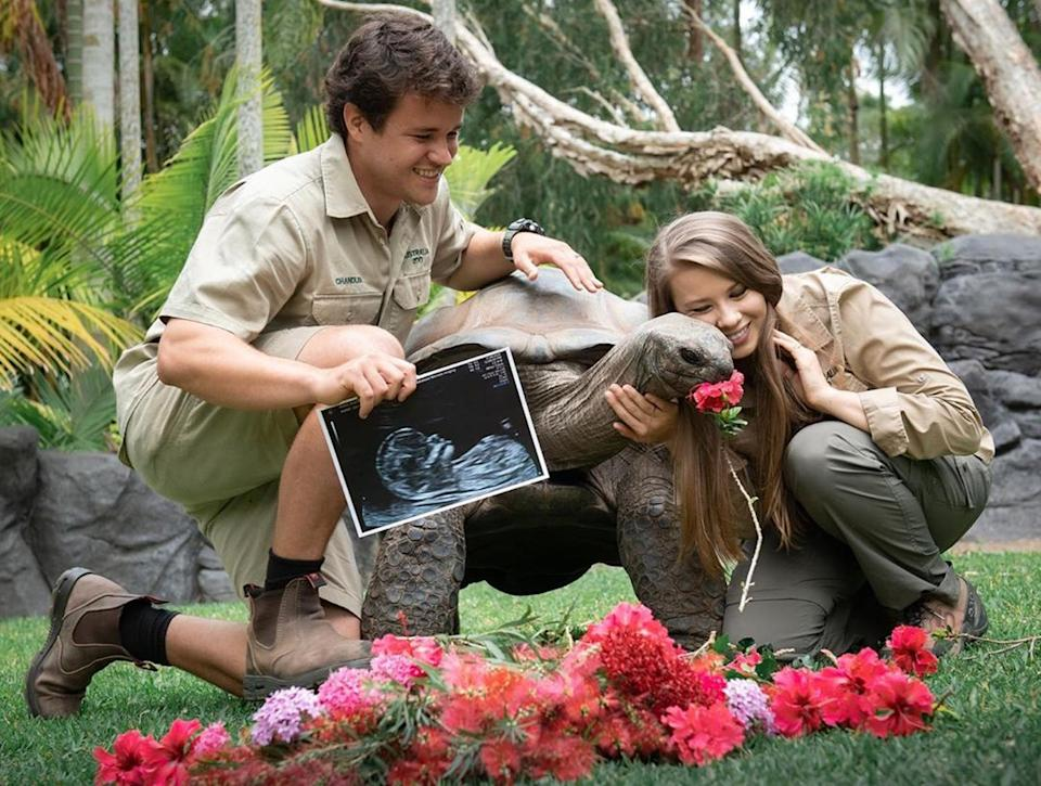 "<p>Posing with an Aldabra tortoise, the pair <a href=""https://www.instagram.com/p/CFb_F12BFIT/"" rel=""nofollow noopener"" target=""_blank"" data-ylk=""slk:showed off another ultrasound and their big smiles"" class=""link rapid-noclick-resp"">showed off another ultrasound and their big smiles</a>, sharing, ""Baby girl, you are our world. ❤️""</p> <p>Bindi added, ""Our beautiful daughter is now about the same size as a hatchling Aldabra tortoise and is as healthy as can be. We can't wait for her arrival next year."" </p>"
