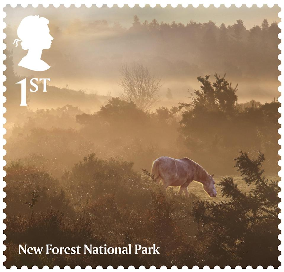 National Parks New Forest