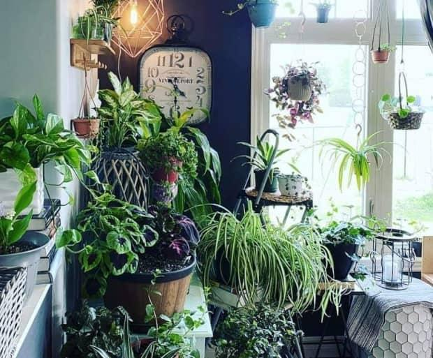 Houseplants are an opportunity for people to 'have a little life in front of them.' (P.E.I. Plant Pals/Facebook - image credit)