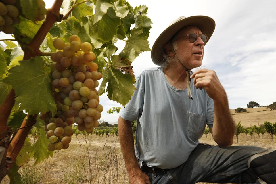 """Randall Grahm, founder of Bonny Doon Vineyard, tends to young grenache noir vines. <span class=""""copyright"""">(Carolyn Cole / Los Angeles Times)</span>"""