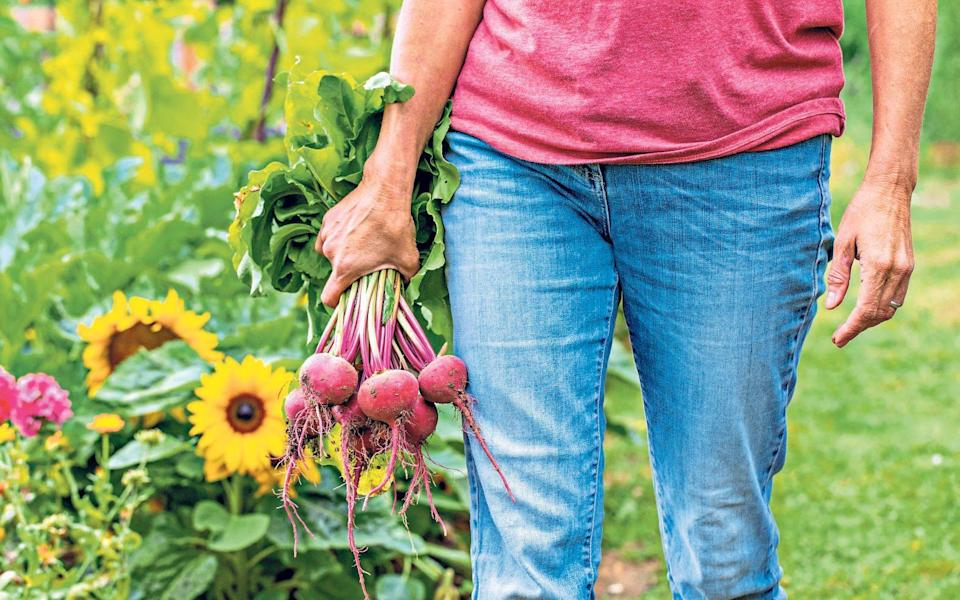 Sow a small row of beetroot every month from April to September for a never-ending flow of fresh vegetables - GAP Photos