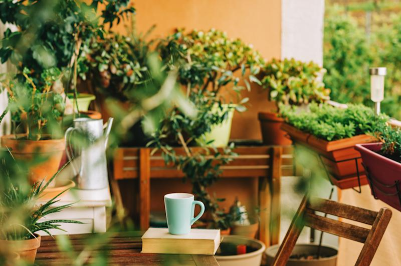 Cozy summer balcony with many potted plants, cup of tea and old vintage book